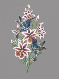 Fensterbild Kolibri